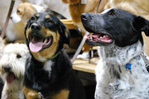 dog daycare picture of happy dogs