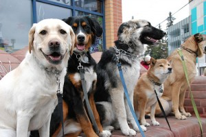 dog daycare on a walk