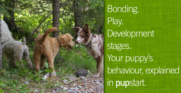 clever canines pupstart