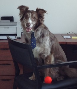Foster stealing the bosses chair
